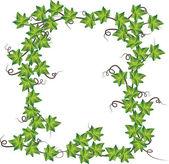 Green ivy  Vector illustration