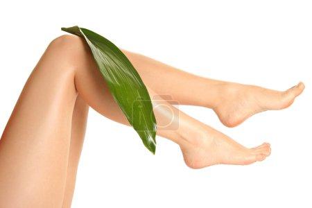 Legs and leaf