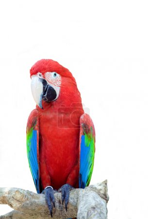 Bright large tropical parrot sits on a branch