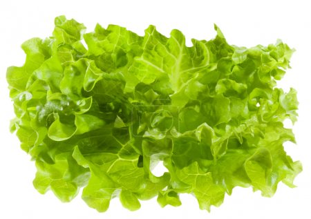 Photo for Green salad on white background - Royalty Free Image