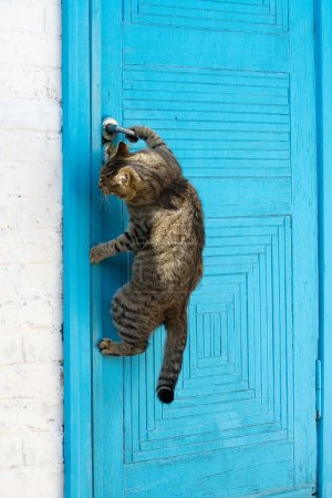 The cat opens a door