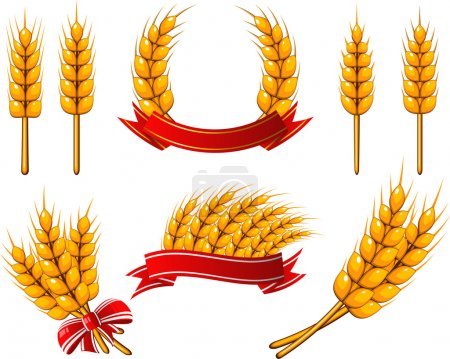 Photo for Vector collection of design elements. Wheat. EPS 8, AI, JPEG - Royalty Free Image