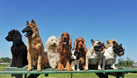 neuf chiens