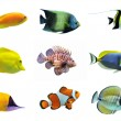 Group of fishes on a white background...