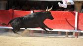 bull en cours d'exécution