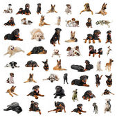 Group of purebred dogs