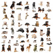 Purebred dogs, puppies and cats on a white background