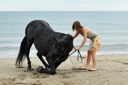 Photo for Kneeling black stallion on the beach with young woman - Royalty Free Image