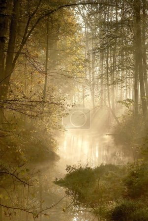 Sunlight falls into misty forest