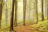 Hösten skogen i ett naturreservat