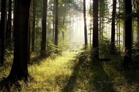 Photo pour Lumière vive, tomber dans la forêt sombre. photo prise en juillet. - image libre de droit