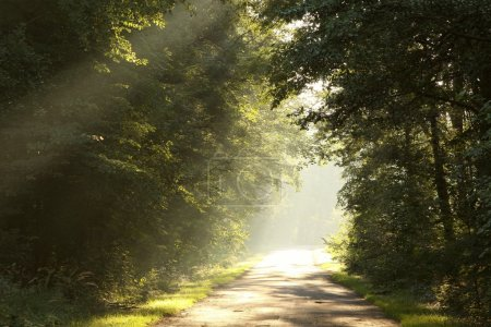 Country road in the forest on misty morning