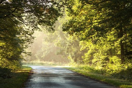 Misty forest road at sunrise