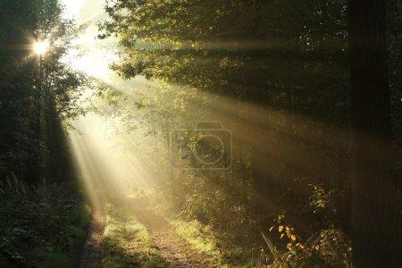 Photo pour Sentier de la Forêt brumeuse à l'aube du premier jour de l'automne. - image libre de droit