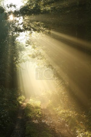 Morning sun falls into autumn forest