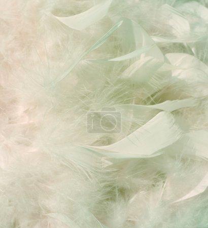 Photo pour Plumes fumées blanc neige et rose hiver avec surbrillance sur le fond gauche - image libre de droit