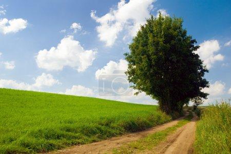 Photo pour Paysage estival saturé - Arbre solitaire près de la route de campagne. Mazury, Pologne . - image libre de droit