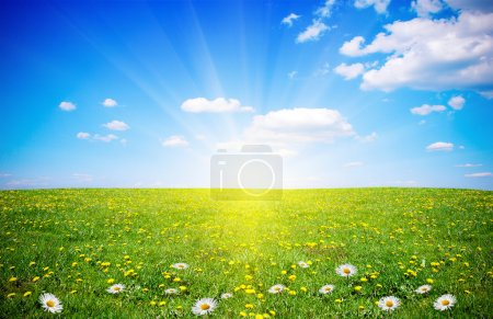 Photo for Beautiful spring field with flowers in sunlight - Royalty Free Image