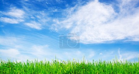 Green gras and vibrant sky