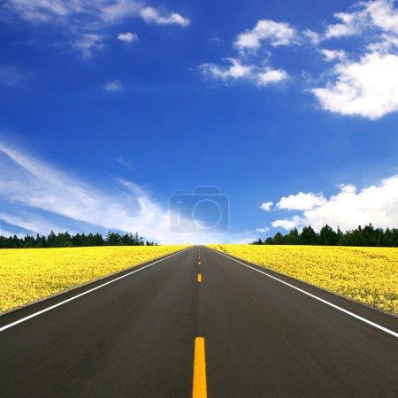 Photo pour Route asphaltée - image libre de droit