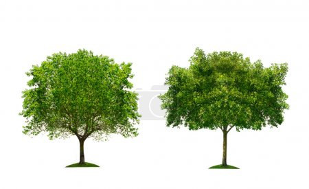 Two green tree