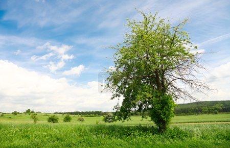 paysage du pays