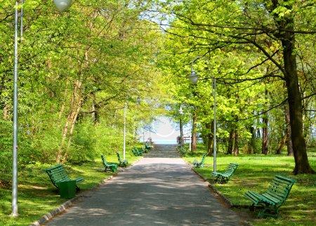 Foto de Parque verde - Imagen libre de derechos