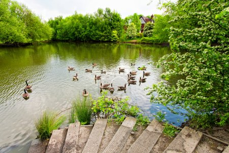 Beautiful lake with geese