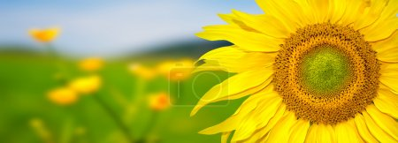 Sunflower banner