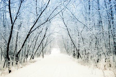 Photo pour Ruelle de l'hiver - image libre de droit