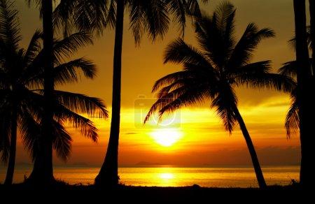 Photo pour Affichage des contours des palmiers noir pendant le coucher du soleil sur la plage - image libre de droit