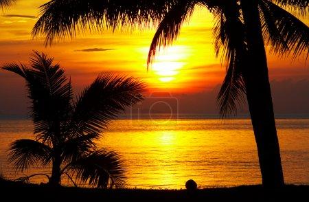 Photo pour Vue des contours noirs des palmiers au coucher du soleil sur la plage - image libre de droit