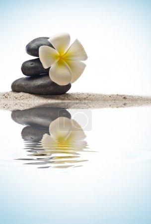 Photo pour Vue rapprochée des pierres grises et de la fleur sur la couleur arrière - image libre de droit