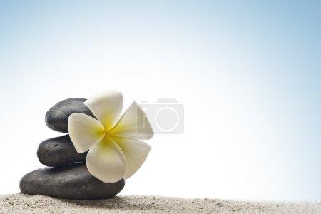 Photo pour Bouchent la vue des pierres grises et de fleurs sur le dos de couleur - image libre de droit