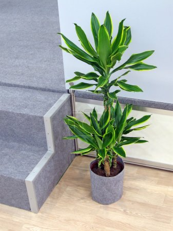 Green plant with leafs, interior design