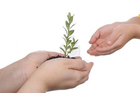 Photo pour Plante - image libre de droit