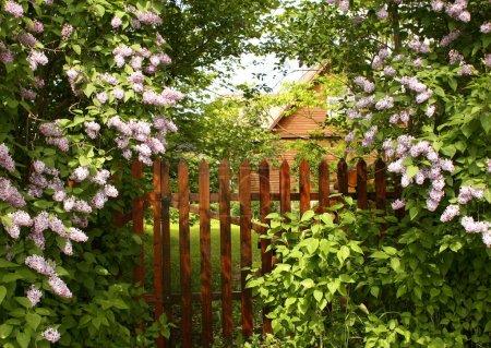 Secret entrance to the garden