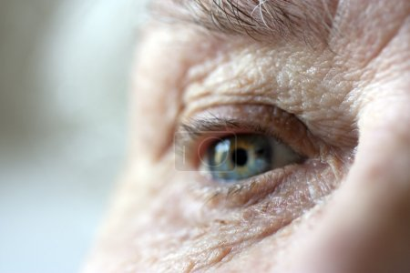 Photo for Very short depth of field focused on inner eye and wrinkles around eye in foreground - Royalty Free Image