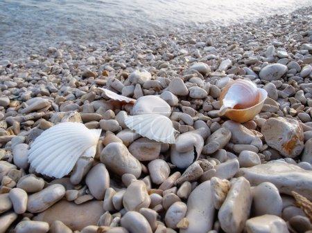 Photo pour Gros plan sur les détails sur la plage de galets quelque part sur la côte Adriatique - image libre de droit