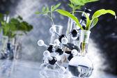 Laboratorní sklo, rostlina