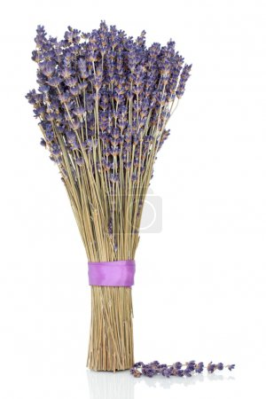 Photo for Dried lavender herb flower sprigs tied in a bunch with a purple ribbon and scattered, over white background with reflection. - Royalty Free Image