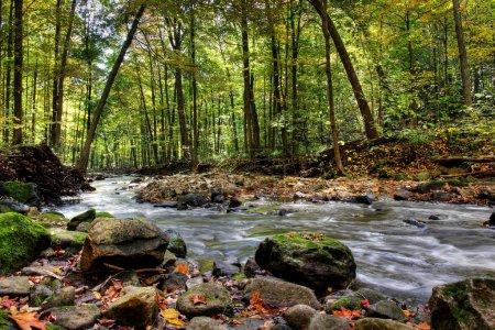 Photo pour Belle cascade sur une petite rivière forestière en Ontario - image libre de droit