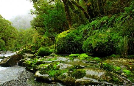 Photo pour Forêt tropicale luxuriante et paysage fluvial en Nouvelle-Zélande - image libre de droit