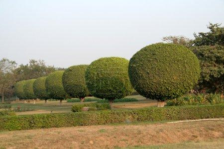 Row of Shrubby Spheres