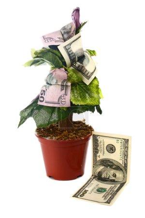 Photo pour Arbre à argent et dollars isolés sur fond blanc - image libre de droit