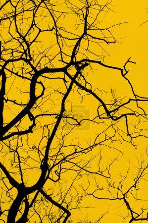 Photo pour Silhouette d'arbre - image libre de droit