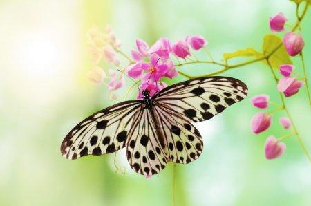 Photo pour Papier de riz papillon sur la fleur rose - image libre de droit