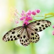 Rice Paper Butterfly on pink flower...