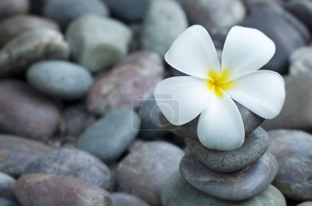 Photo for Close up white frangipani and therapy stones - Royalty Free Image