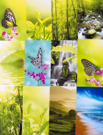 Photo for Collage nature postcard. All image belongs to me. - Royalty Free Image